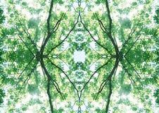 Zielona tekstura   Kwiecisty wzór   Projekta element   Textured tło fotografia royalty free