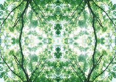 Zielona tekstura   Kwiecisty wzór   Projekta element   Textured tło zdjęcie royalty free