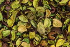 Zielona tekstura wysuszeni kwiaty Zdjęcia Stock