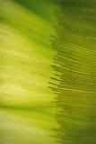 Zielona tekstura z ciemnymi liniami Fotografia Royalty Free