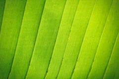 Zielona tekstura z liniami Zdjęcia Royalty Free