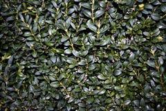 zielona tekstury ściany Obraz Stock