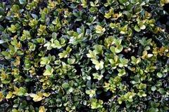 zielona tekstury ściany Zdjęcie Stock