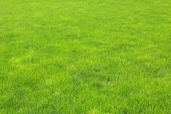 Zielona trawa