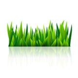 Zielona trawa royalty ilustracja