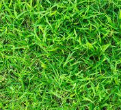 Zielona trawa Zdjęcie Stock