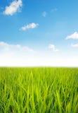 Zielona trawa Obraz Stock
