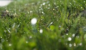 Zielona trawa obrazy stock