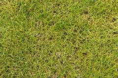 Zielona trawa Zdjęcia Royalty Free