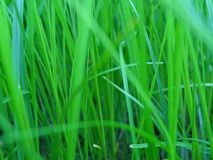 Zielona trawa fotografia stock