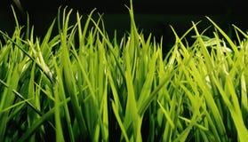 Zielona trawa Zdjęcia Stock