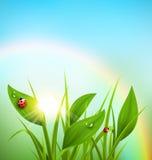 Zielona trawa, banan, biedronki z wschodem słońca i tęcza na b, ilustracja wektor