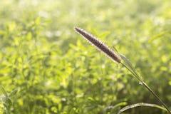 Zielona trawa, bru zbliżenie, przestrzeń dla teksta obraz stock