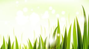Zielona trawa dla ciebie projektuje Fotografia Stock
