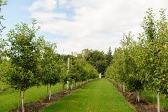 Zielona trawa, drzewa w parku na słonecznym dniu obrazy royalty free