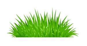 Zielona trawa Gazon roślina ilustracja wektor