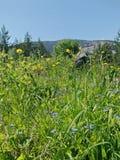 Zielona trawa i błękitny niebo Zdjęcia Royalty Free