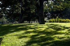 Zielona trawa i cień Fotografia Stock