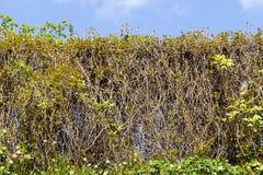 zielona trawa i depresja krzak zdjęcie stock