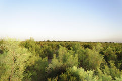 Zielona trawa i krzaki Zdjęcie Royalty Free