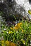 Zielona trawa i liście Zdjęcie Royalty Free