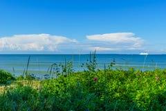 Zielona trawa i morze bałtyckie Obraz Stock