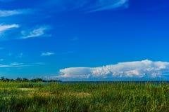 Zielona trawa i morze bałtyckie Zdjęcia Royalty Free