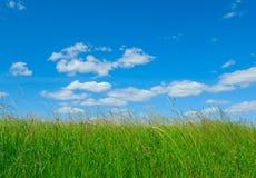 Zielona trawa i niebieskie niebo Zdjęcie Stock