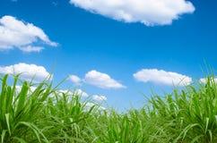Zielona trawa i niebieskie niebo Zdjęcia Stock