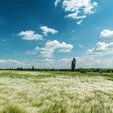 Zielona trawa i niebieskie niebo Zdjęcia Royalty Free