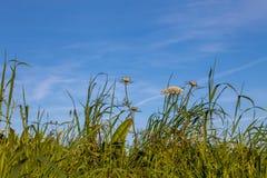 Zielona trawa i niebo Obrazy Royalty Free