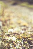 Zielona trawa i sucha trawa, suche rośliny, suszymy liście Obrazy Stock