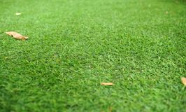 Zielona trawa jest piękna Jaskrawa - zielona trawa Fotografia Royalty Free