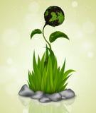 Zielona trawa kiełkuje od ziemi Fotografia Stock