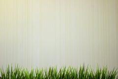 Zielona trawa na drewnianym białym tle Fotografia Royalty Free