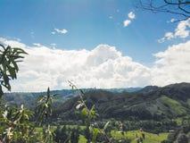 Zielona trawa na drodze obraz stock