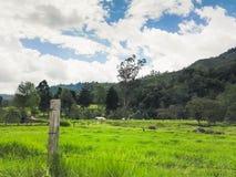 Zielona trawa na drodze zdjęcie royalty free