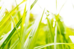 Zielona trawa na jaskrawym tle Obrazy Royalty Free