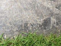 Zielona trawa na kamiennej podłogowej tło teksturze Zdjęcie Royalty Free