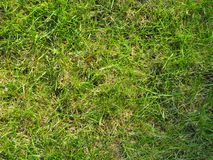 Zielona trawa na lecie lub wiośnie zdjęcie stock