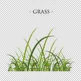 Zielona trawa na przejrzystym tle Wektorowy ilustracyjny colle Zdjęcia Royalty Free