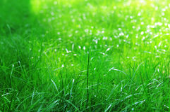 Zielona trawa na słonecznym dniu obraz royalty free