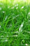 Zielona trawa na słonecznym dniu zdjęcie royalty free