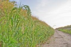 Zielona trawa na stronie droga Obrazy Royalty Free