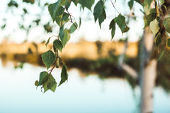 Zielona trawa na tle rzeka zdjęcie royalty free