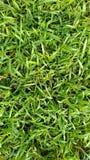 Zielona trawa na wiośnie Zdjęcie Royalty Free