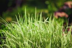 Zielona trawa na zamazanym tle Obrazy Royalty Free