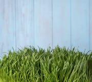 Zielona trawa nad drewnianym tłem Zdjęcie Royalty Free