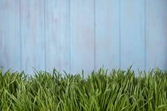 Zielona trawa nad drewnianym tłem Zdjęcie Stock