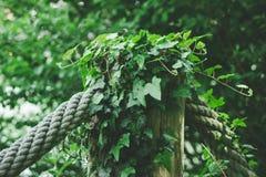 Zielona trawa, nadużyta arkana Obrazy Royalty Free